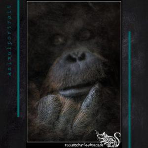 Diarium 2020-05-22 - Tierportrait